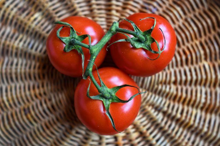 tomate engorda