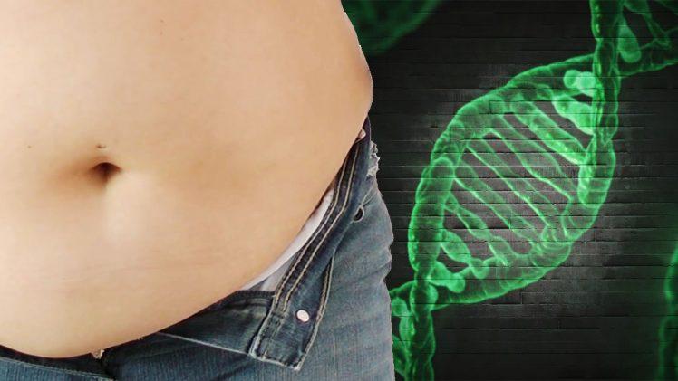 genes influyen en el peso